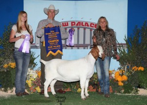 Ch FB Boer Doe Show B Julie Carreiro Web image only