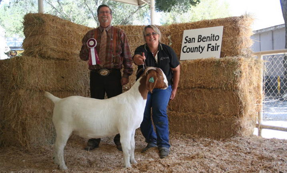 San Benito Country Fair Goat Winner