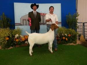 Vegas Girl Cow Palace Win